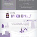 All-about-lavender-infographic_V2-01